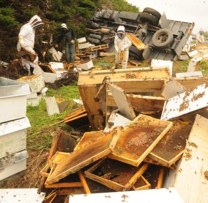 Beehive truck crash near Carterton.