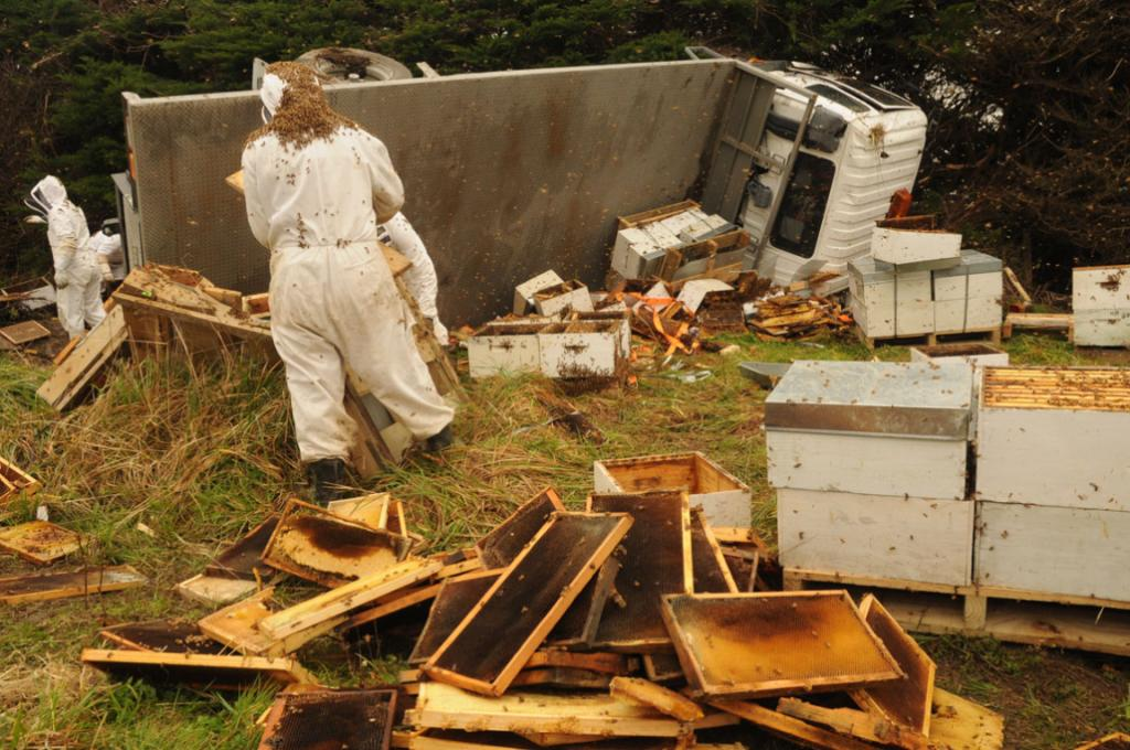 The clean up after a truck carrying beehives crashed near Carterton.