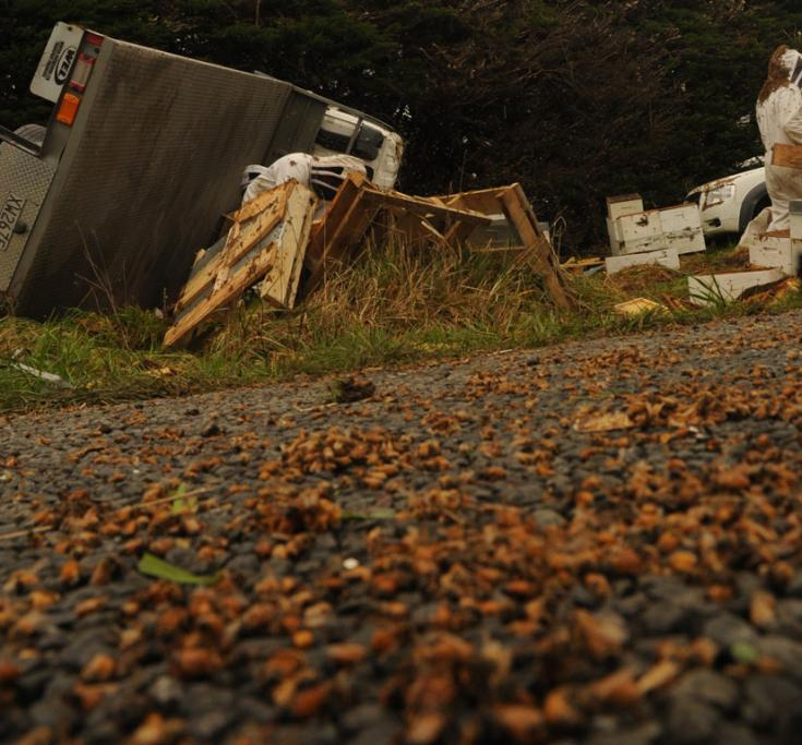 The road is covered with dead bees after a truck carrying beehives crashed near Carterton.