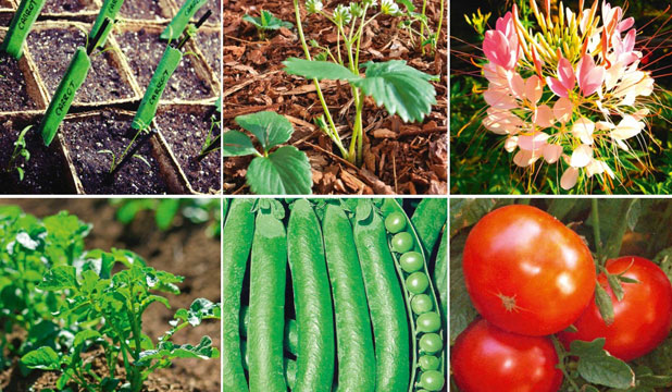 Peas And Plants Please From Sowing To Planting Flowers There Is A Lot