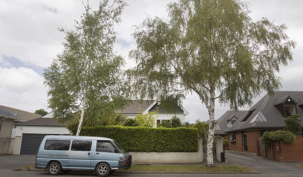 SNEEZE FACTOR: The two silver birches outside Canterbury rugby boss Hamish Riach's house.