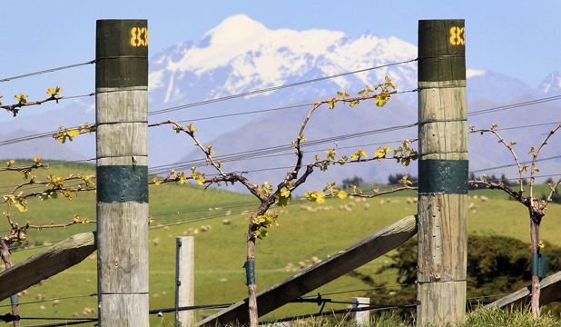 Awatere vineyard of Yealands Wines with Mount Tapuae-o-Uenuku in the background.