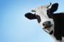 We must ask, do we need dairy?