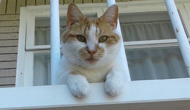 Pet Of The Day Lincoln The Unimpressed Cat Stuff Co Nz